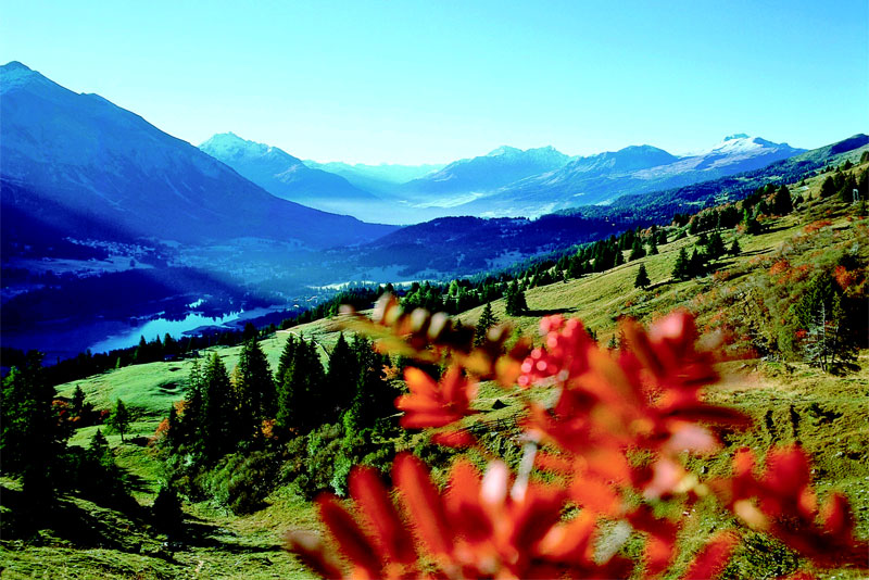 Lenzerheide countryside