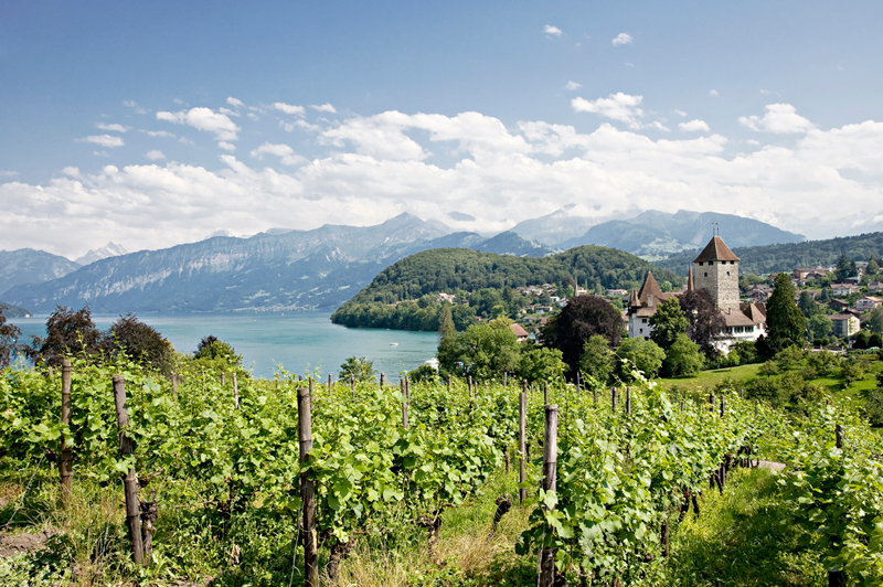 Castle vineyards, Spiez